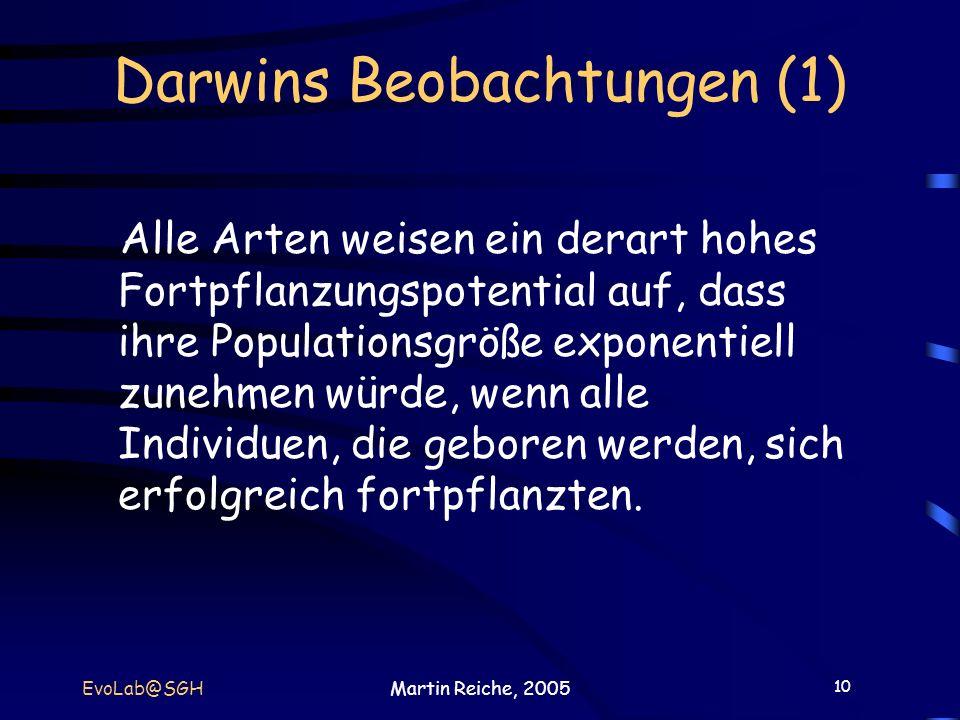 10 EvoLab@SGHMartin Reiche, 2005 Darwins Beobachtungen (1) Alle Arten weisen ein derart hohes Fortpflanzungspotential auf, dass ihre Populationsgröße