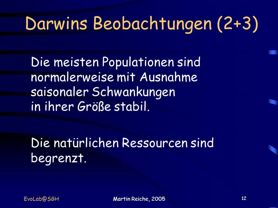 12 EvoLab@SGHMartin Reiche, 2005 Darwins Beobachtungen (2+3) Die meisten Populationen sind normalerweise mit Ausnahme saisonaler Schwankungen in ihrer