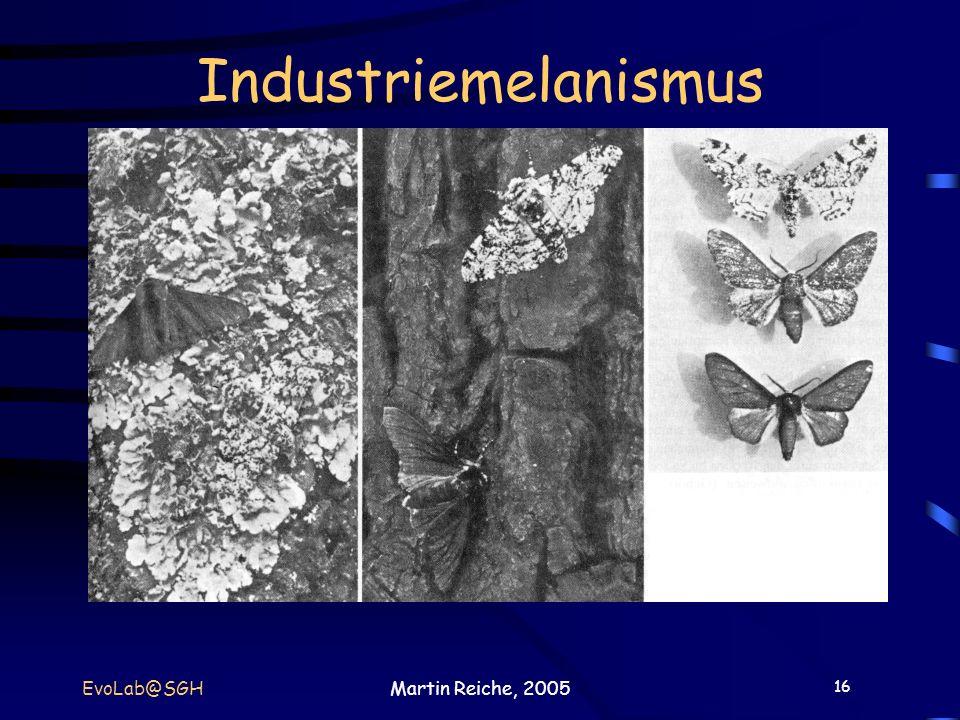 16 EvoLab@SGHMartin Reiche, 2005 Industriemelanismus