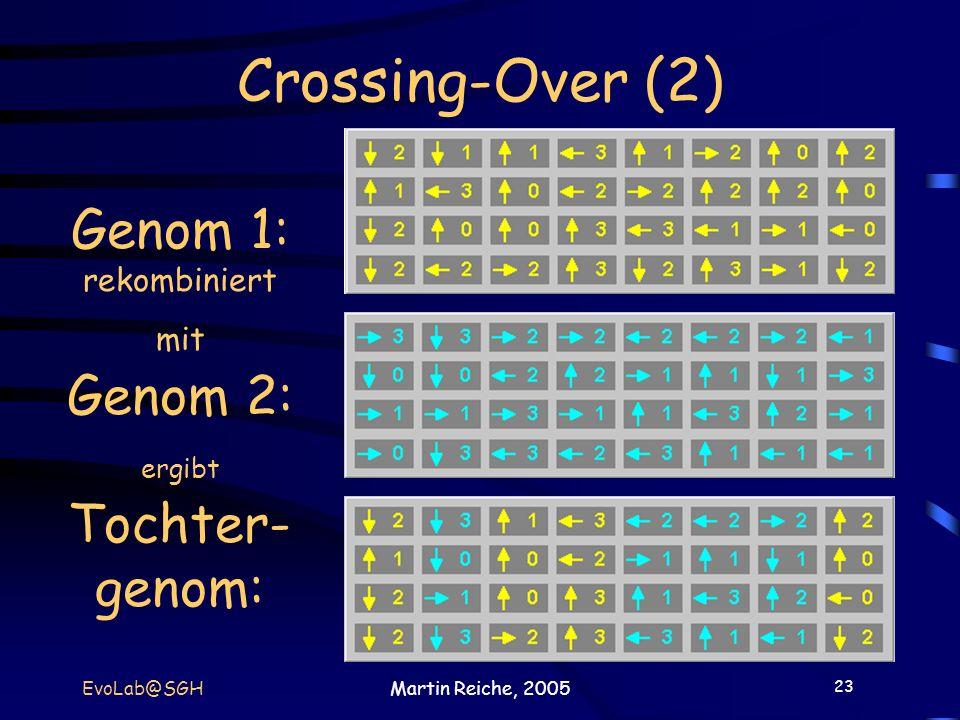 23 EvoLab@SGHMartin Reiche, 2005 Crossing-Over (2) Genom 1: rekombiniert mit Genom 2: ergibt Tochter- genom: