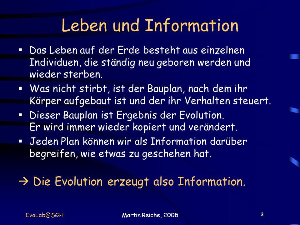 3 EvoLab@SGHMartin Reiche, 2005 Leben und Information Das Leben auf der Erde besteht aus einzelnen Individuen, die ständig neu geboren werden und wied