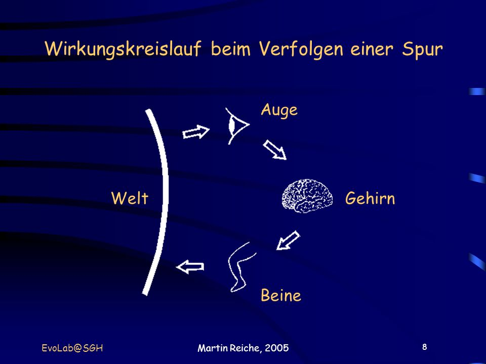 8 EvoLab@SGHMartin Reiche, 2005 Wirkungskreislauf beim Verfolgen einer Spur Welt Auge Gehirn Beine