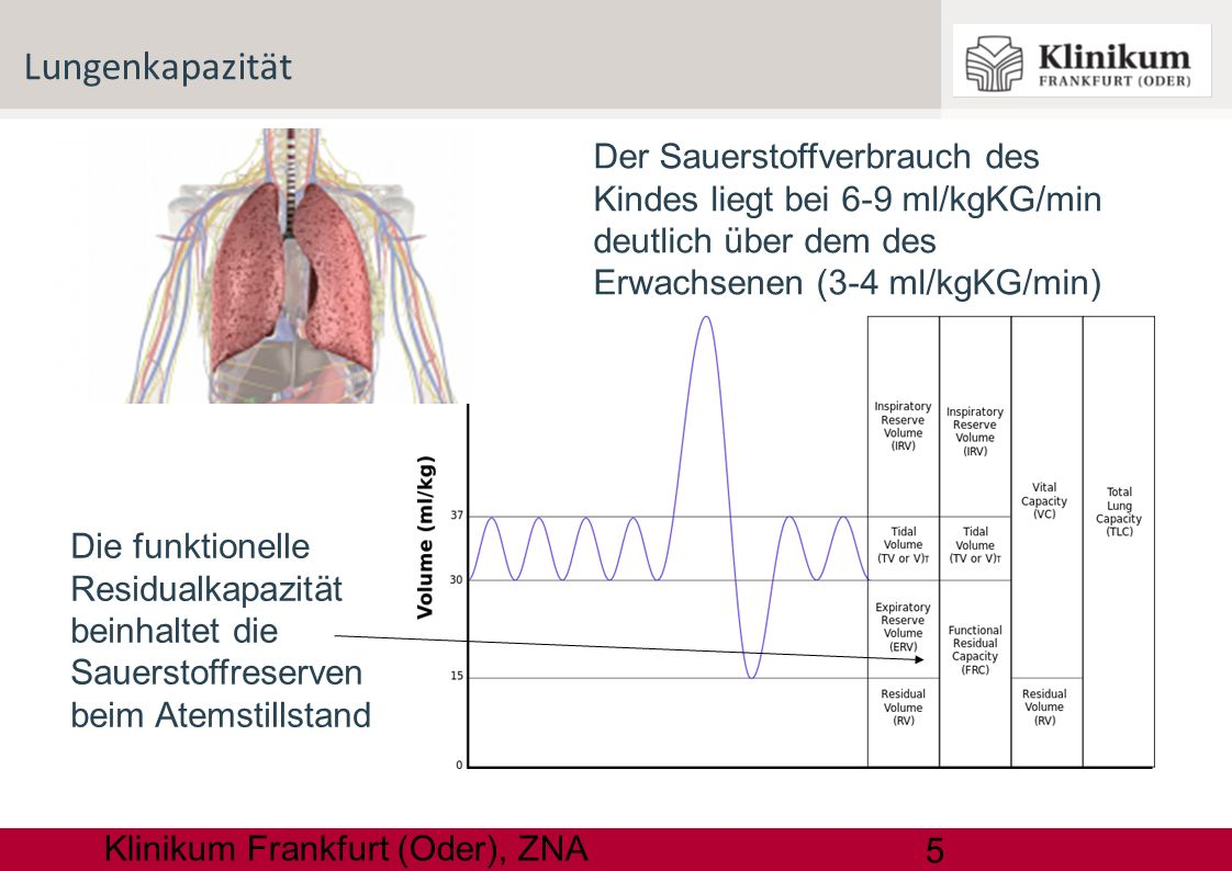 5 Klinikum Frankfurt (Oder), ZNA Lungenkapazität Die funktionelle Residualkapazität beinhaltet die Sauerstoffreserven beim Atemstillstand Der Sauersto