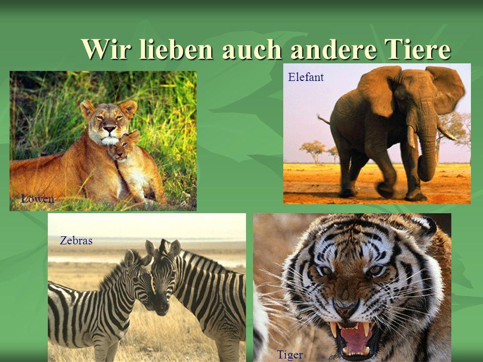 Wir lieben auch andere Tiere Löwen Elefant Zebras Tiger