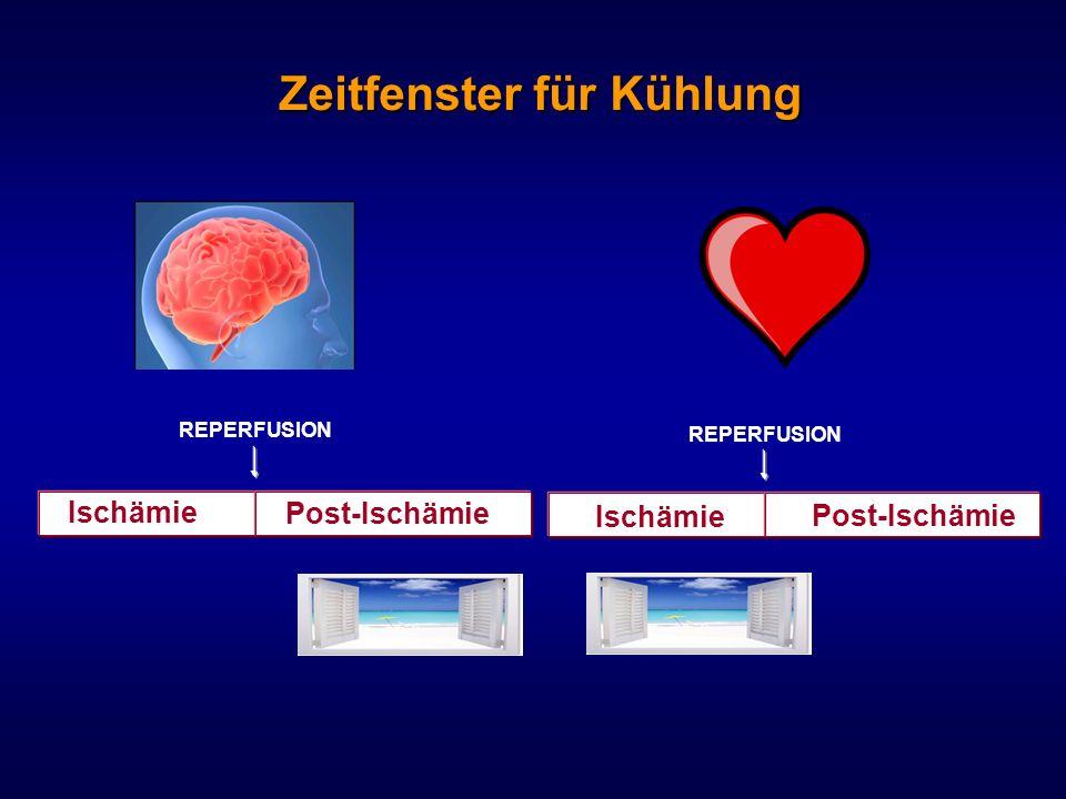 Zeitfenster für Kühlung Ischämie Post-Ischämie REPERFUSION Ischämie Post-Ischämie
