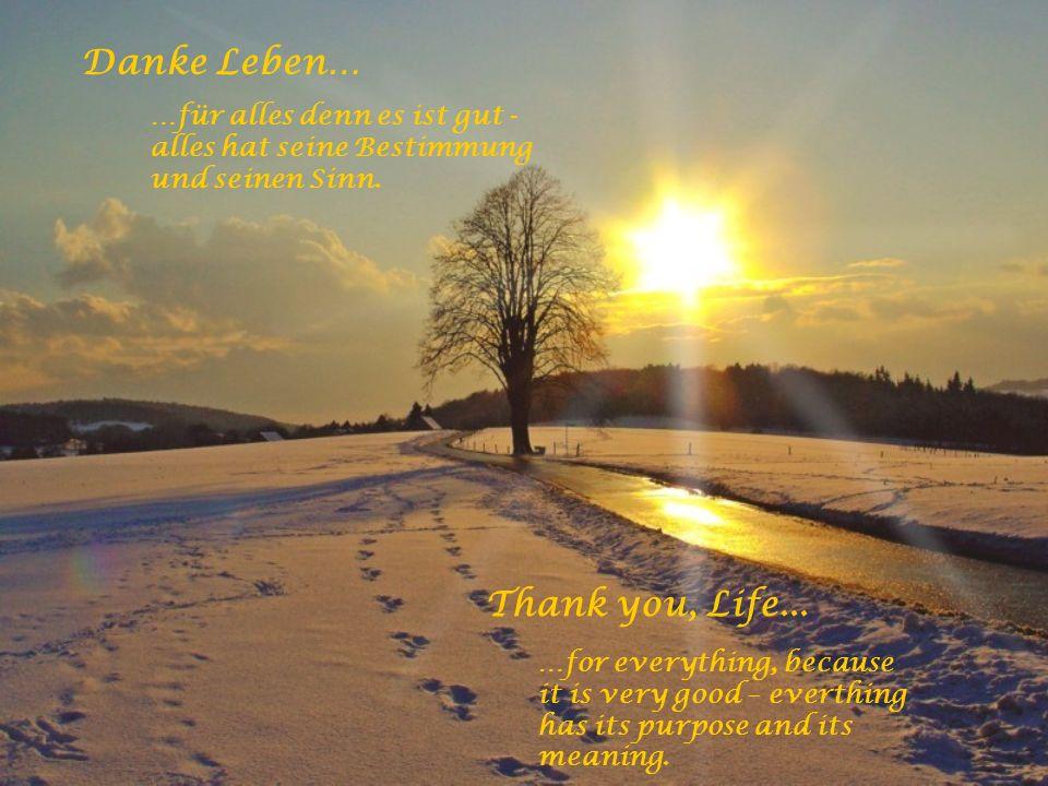 Danke Leben… …dass Du auch nach dem Tod bei mir bleibst und für die Erkenntnis, dass der Tod nur ein Neubeginn ist. Thank you, Life... …for staying wi
