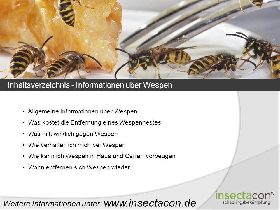 Allgemeine Informationen über Wespen Was kostet die Entfernung eines Wespennestes Was hilft wirklich gegen Wespen Wie verhalten ich mich bei Wespen Wi