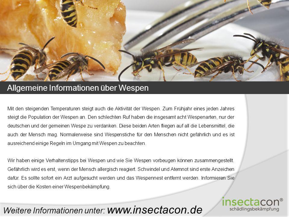 Allgemeine Informationen über Wespen Mit den steigenden Temperaturen steigt auch die Aktivität der Wespen. Zum Frühjahr eines jeden Jahres steigt die