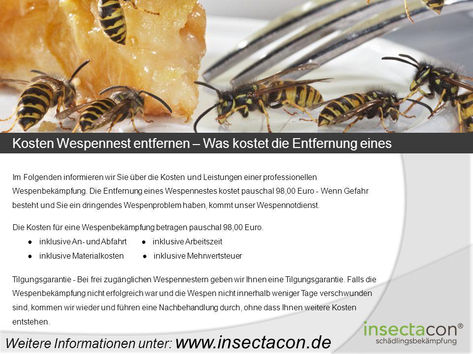 Kosten Wespennest entfernen – Was kostet die Entfernung eines Wespennestes? Weitere Informationen unter: www.insectacon.de Im Folgenden informieren wi