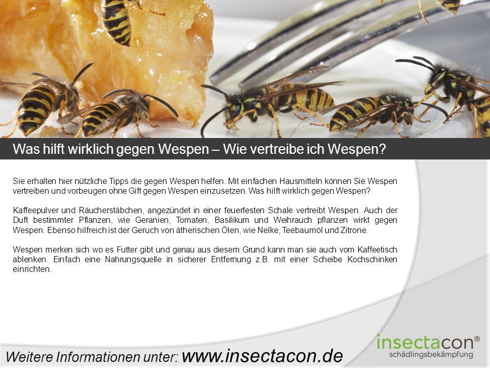 Was hilft wirklich gegen Wespen – Wie vertreibe ich Wespen? Weitere Informationen unter: www.insectacon.de Sie erhalten hier nützliche Tipps die gegen