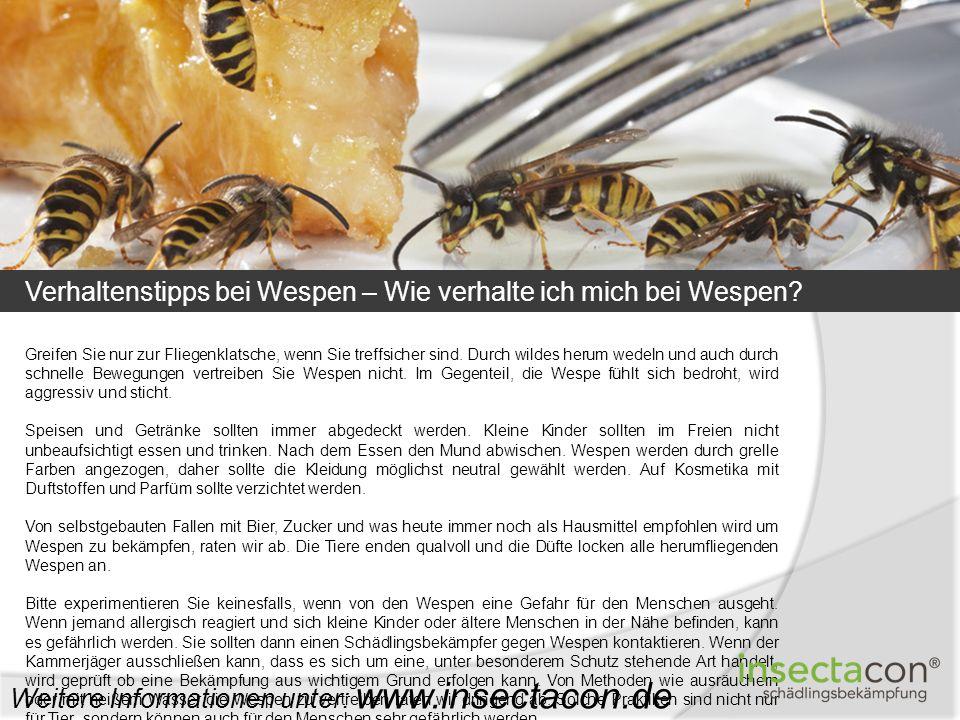 Verhaltenstipps bei Wespen – Wie verhalte ich mich bei Wespen? Weitere Informationen unter: www.insectacon.de Greifen Sie nur zur Fliegenklatsche, wen
