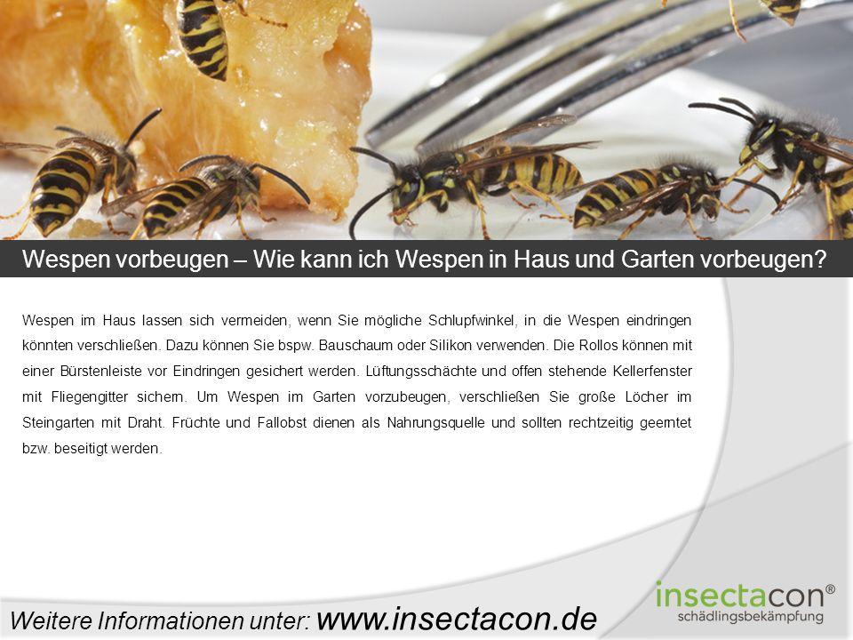 Wespen vorbeugen – Wie kann ich Wespen in Haus und Garten vorbeugen? Weitere Informationen unter: www.insectacon.de Wespen im Haus lassen sich vermeid