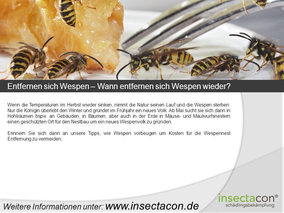 Entfernen sich Wespen – Wann entfernen sich Wespen wieder? Weitere Informationen unter: www.insectacon.de Wenn die Temperaturen im Herbst wieder sinke