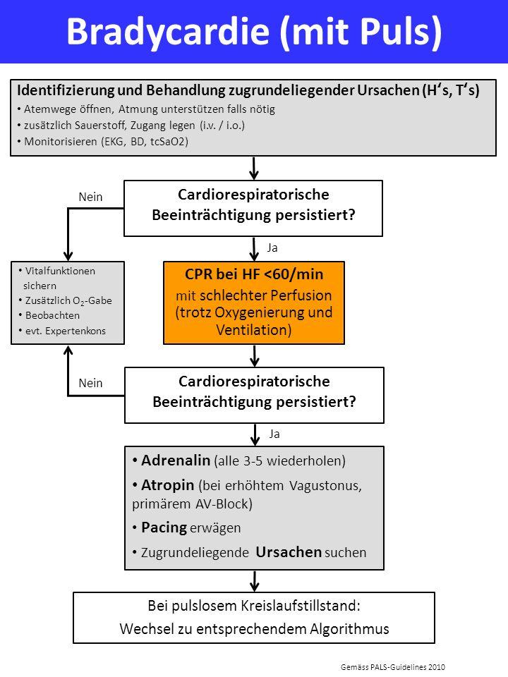 Bradycardie (mit Puls) Identifizierung und Behandlung zugrundeliegender Ursachen (Hs, Ts) Atemwege öffnen, Atmung unterstützen falls nötig zusätzlich
