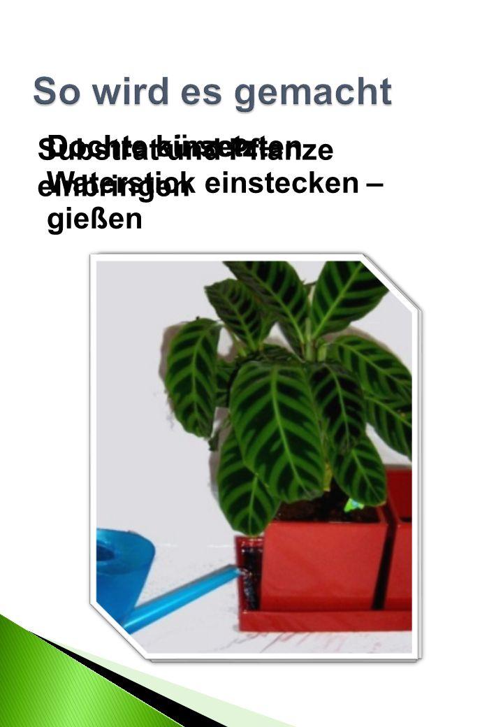 Dochte einsetzten Substrat und Pflanze einbringen Dochte kürzen – Waterstick einstecken – gießen