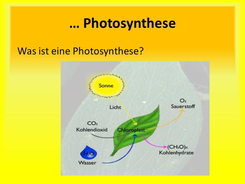 … Photosynthese Was ist eine Photosynthese?