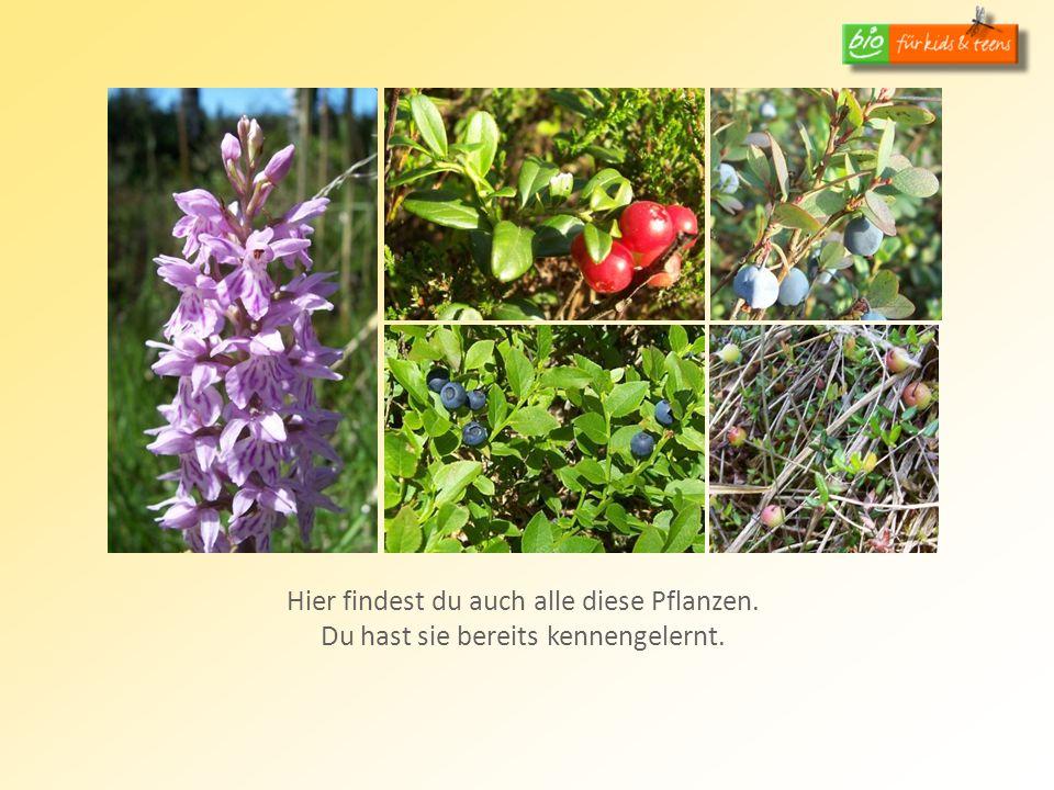 Hier findest du auch alle diese Pflanzen. Du hast sie bereits kennengelernt.