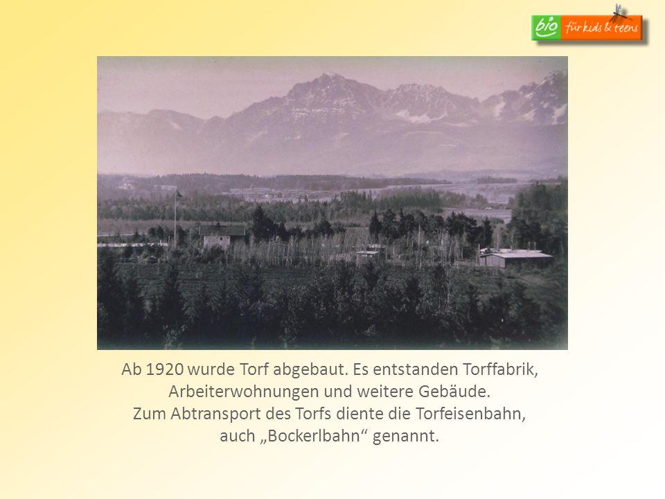 Ab 1920 wurde Torf abgebaut. Es entstanden Torffabrik, Arbeiterwohnungen und weitere Gebäude. Zum Abtransport des Torfs diente die Torfeisenbahn, auch