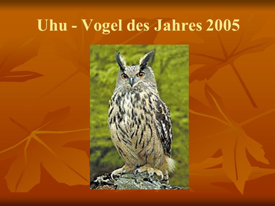 Uhu - Vogel des Jahres 2005