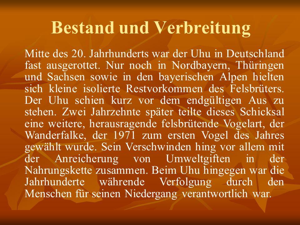 Bestand und Verbreitung Mitte des 20. Jahrhunderts war der Uhu in Deutschland fast ausgerottet. Nur noch in Nordbayern, Thüringen und Sachsen sowie in