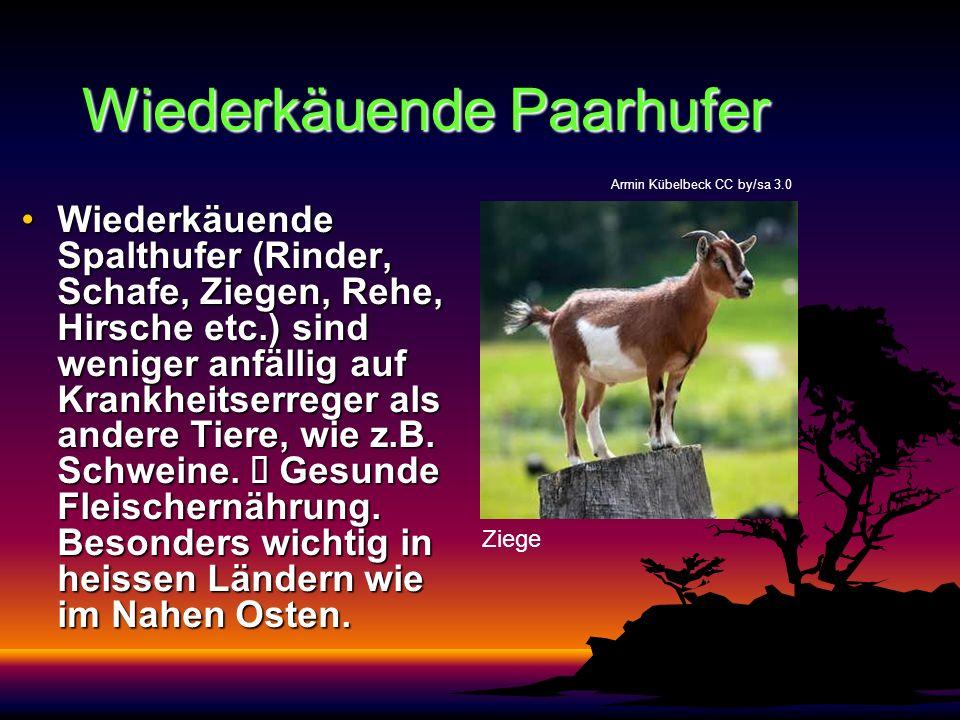 Wiederkäuende Paarhufer Wiederkäuende Spalthufer (Rinder, Schafe, Ziegen, Rehe, Hirsche etc.) sind weniger anfällig auf Krankheitserreger als andere T