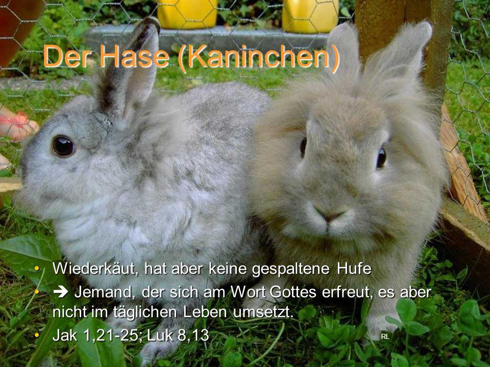 Der Hase (Kaninchen) Wiederkäut, hat aber keine gespaltene HufeWiederkäut, hat aber keine gespaltene Hufe Jemand, der sich am Wort Gottes erfreut, es