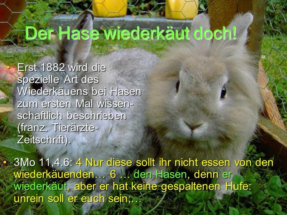Der Hase wiederkäut doch! 3Mo 11,4.6: 4 Nur diese sollt ihr nicht essen von den wiederkäuenden… 6 … den Hasen, denn er wiederkäut, aber er hat keine g