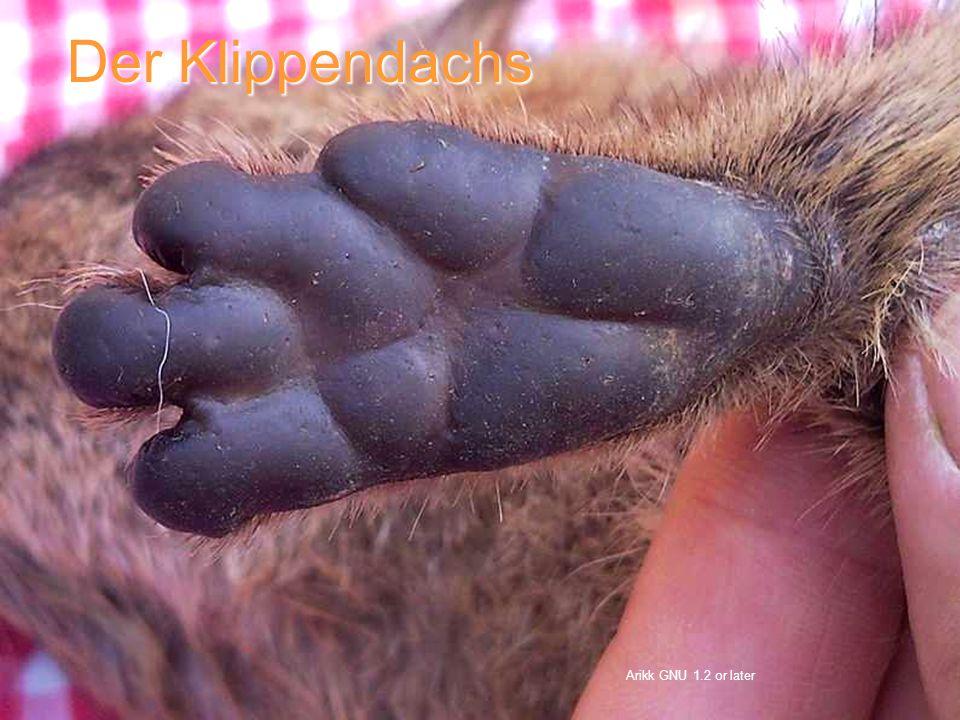 Arikk GNU 1.2 or later Der Klippendachs