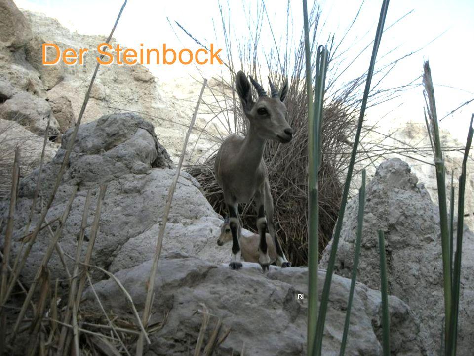 Der Steinbock RL