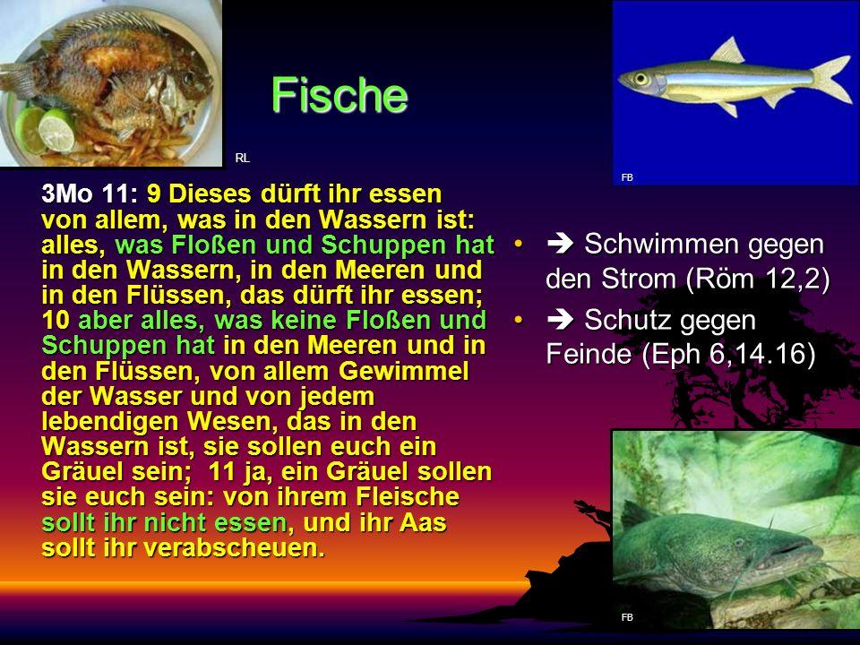 Fische 3Mo 11: 9 Dieses dürft ihr essen von allem, was in den Wassern ist: alles, was Floßen und Schuppen hat in den Wassern, in den Meeren und in den