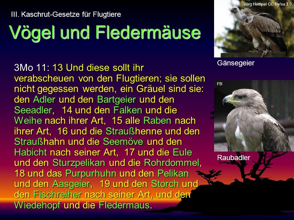 Vögel und Fledermäuse 3Mo 11: 13 Und diese sollt ihr verabscheuen von den Flugtieren; sie sollen nicht gegessen werden, ein Gräuel sind sie: den Adler