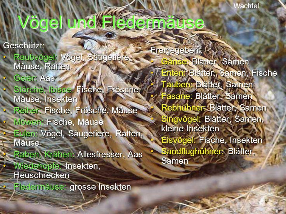 Vögel und Fledermäuse Geschützt: Raubvögel: Vögel, Säugetiere, Mäuse, RattenRaubvögel: Vögel, Säugetiere, Mäuse, Ratten Geier: AasGeier: Aas Störche,