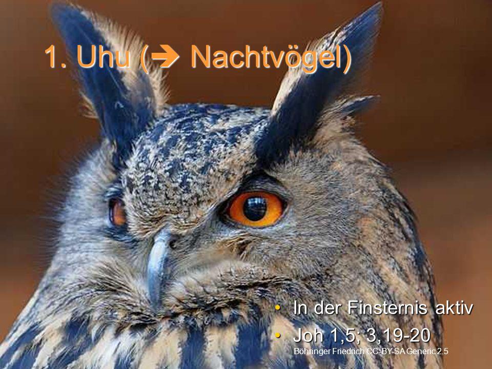 1. Uhu ( Nachtvögel) In der Finsternis aktivIn der Finsternis aktiv Joh 1,5; 3,19-20Joh 1,5; 3,19-20 Böhringer Friedrich CC-BY-SA Generic 2.5