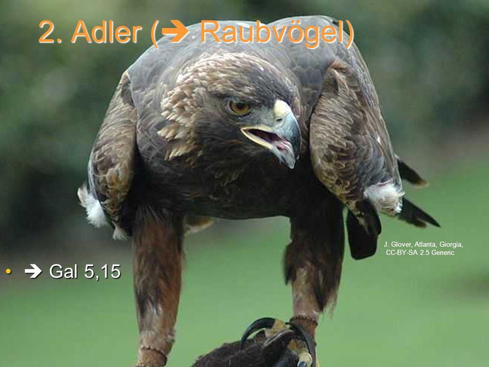 2. Adler ( Raubvögel) Gal 5,15 Gal 5,15 J. Glover, Atlanta, Giorgia, CC-BY-SA 2.5 Generic
