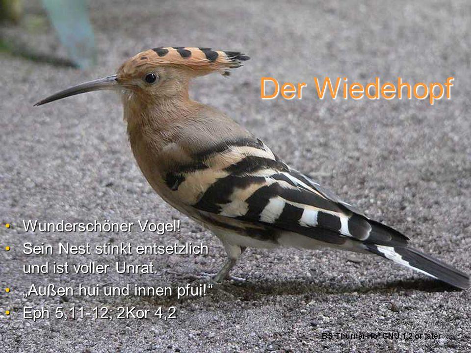 Der Wiedehopf Wunderschöner Vogel!Wunderschöner Vogel! Sein Nest stinkt entsetzlich und ist voller Unrat.Sein Nest stinkt entsetzlich und ist voller U