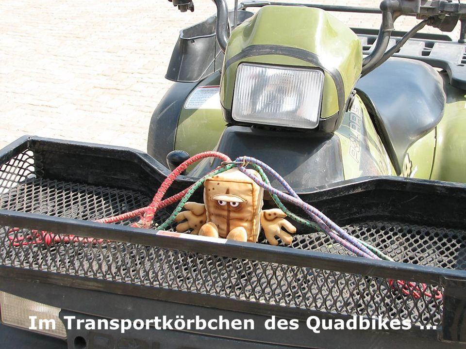 Im Transportkörbchen des Quadbikes...