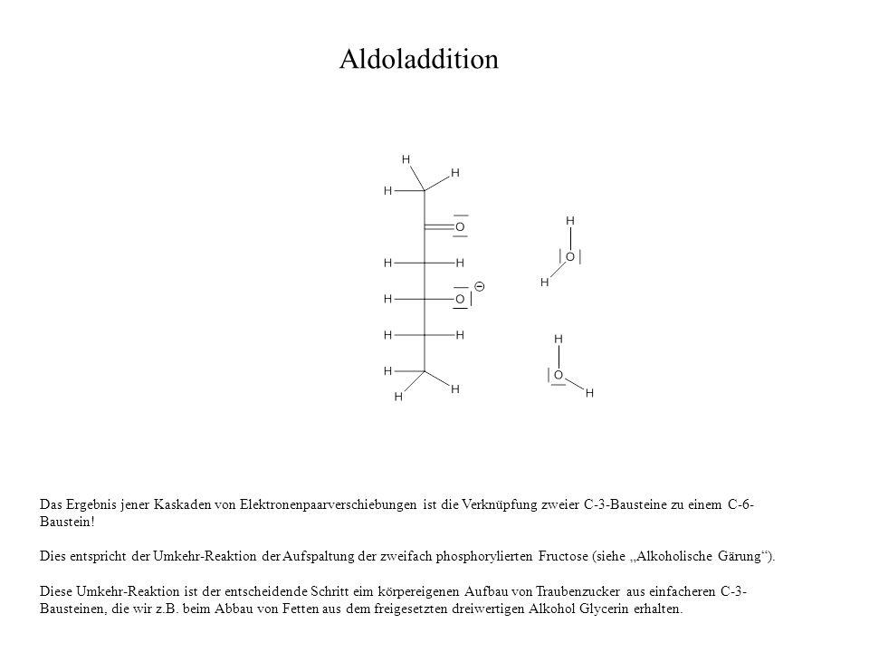 Das Ergebnis jener Kaskaden von Elektronenpaarverschiebungen ist die Verknüpfung zweier C-3-Bausteine zu einem C-6- Baustein.