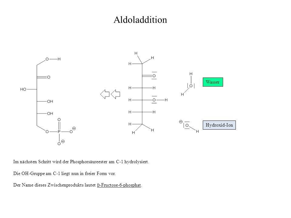 Aldoladdition Wasser Hydroxid-Ion Im nächsten Schritt wird der Phosphorsäureester am C-1 hydrolysiert.