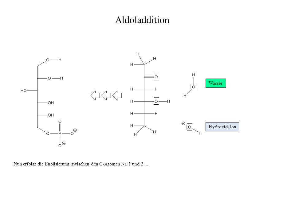 Aldoladdition Wasser Hydroxid-Ion Nun erfolgt die Enolisierung zwischen den C-Atomen Nr. 1 und 2...
