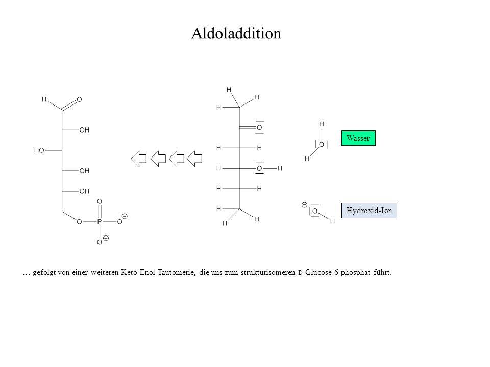 Aldoladdition Wasser Hydroxid-Ion … gefolgt von einer weiteren Keto-Enol-Tautomerie, die uns zum strukturisomeren D -Glucose-6-phosphat führt.