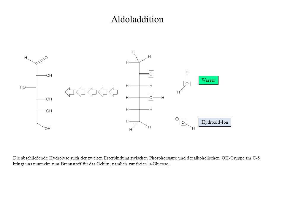 Aldoladdition Wasser Hydroxid-Ion Die abschließende Hydrolyse auch der zweiten Esterbindung zwischen Phosphorsäure und der alkoholischen OH-Gruppe am C-6 bringt uns nunmehr zum Brennstoff für das Gehirn, nämlich zur freien D -Glucose.