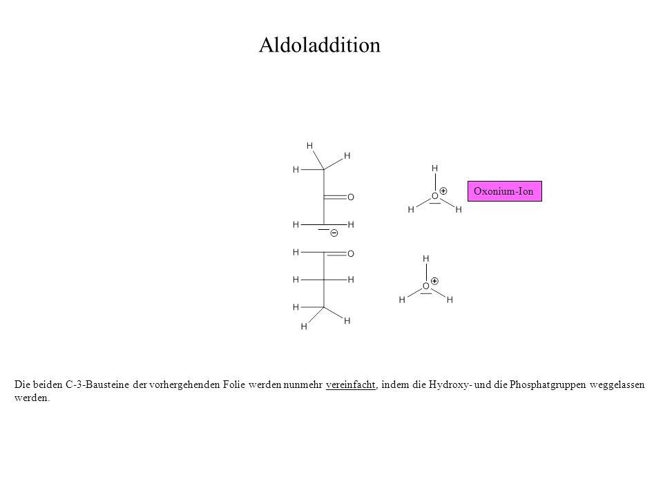 Die beiden C-3-Bausteine der vorhergehenden Folie werden nunmehr vereinfacht, indem die Hydroxy- und die Phosphatgruppen weggelassen werden.