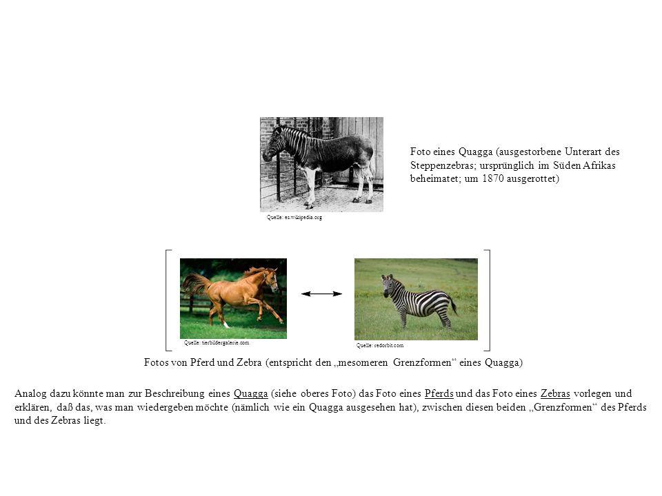 Fotos von Pferd und Zebra (entspricht den mesomeren Grenzformen eines Quagga) Analog dazu könnte man zur Beschreibung eines Quagga (siehe oberes Foto) das Foto eines Pferds und das Foto eines Zebras vorlegen und erklären, daß das, was man wiedergeben möchte (nämlich wie ein Quagga ausgesehen hat), zwischen diesen beiden Grenzformen des Pferds und des Zebras liegt.