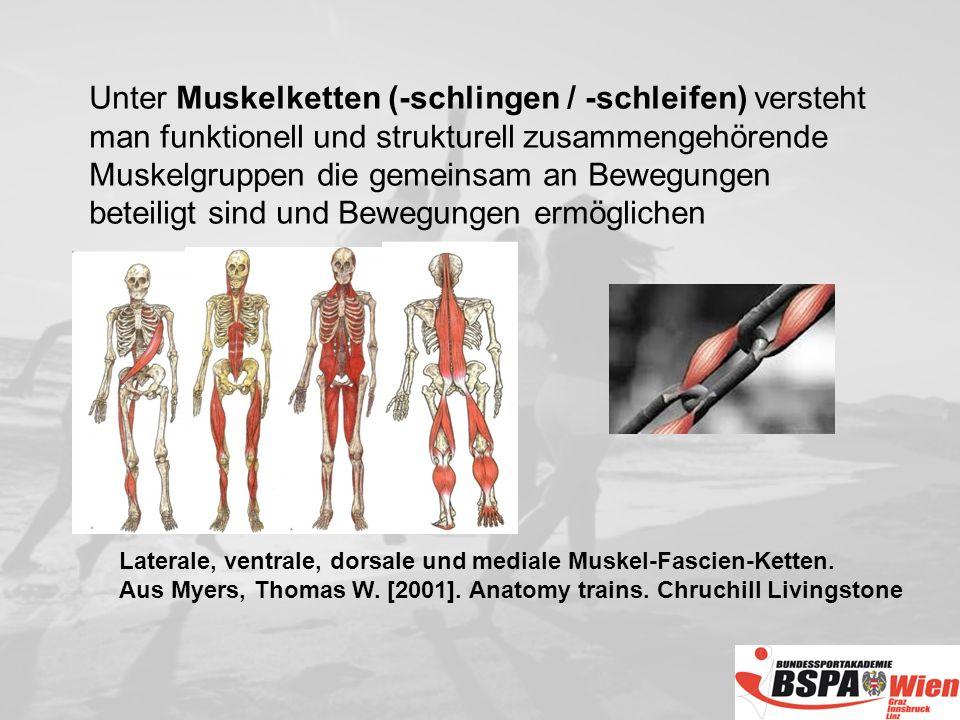 Laterale, ventrale, dorsale und mediale Muskel-Fascien-Ketten.