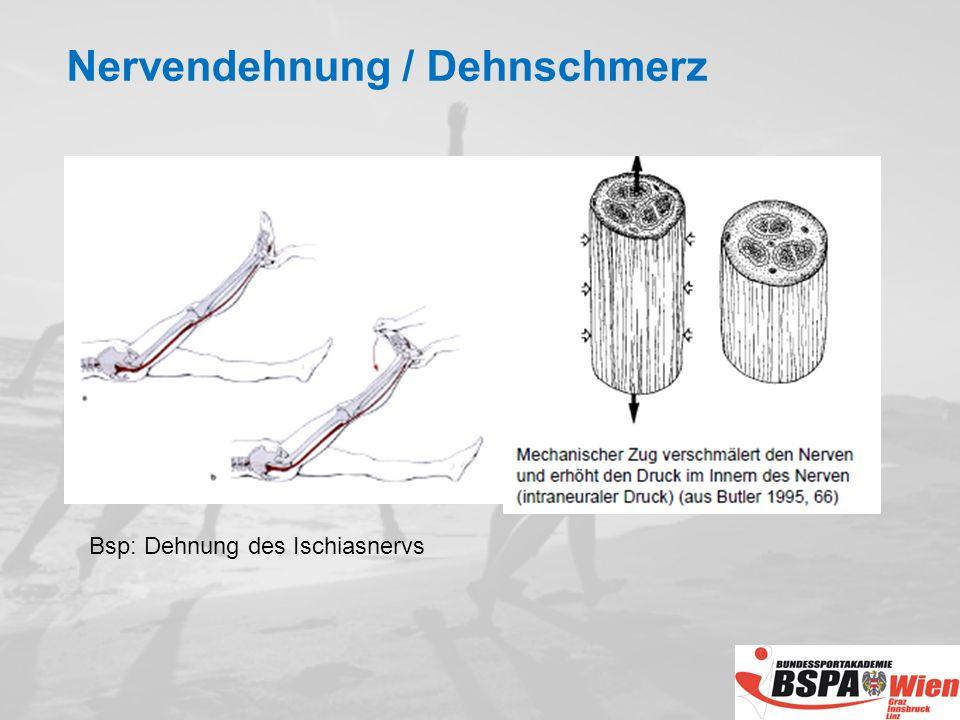 Bsp: Dehnung des Ischiasnervs Nervendehnung / Dehnschmerz