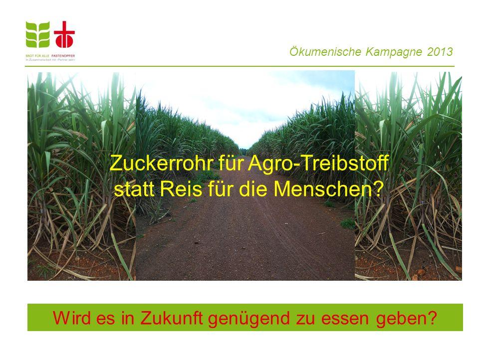 Ökumenische Kampagne 2013 Wird es in Zukunft genügend zu essen geben? Zuckerrohr für Agro-Treibstoff statt Reis für die Menschen?