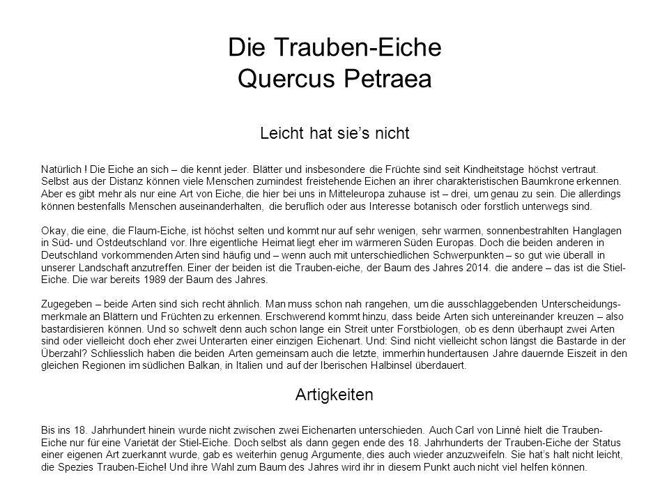 Die Trauben-Eiche Quercus Petraea Artigkeiten (Fortsetzung) Wie auch immer.