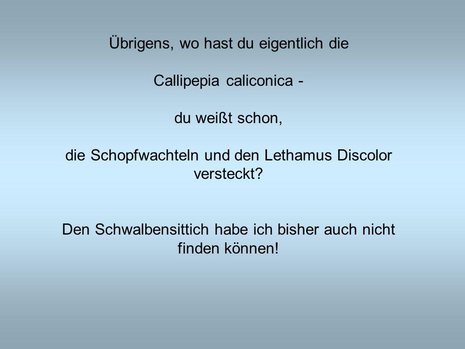 Übrigens, wo hast du eigentlich die Callipepia caliconica - du weißt schon, die Schopfwachteln und den Lethamus Discolor versteckt? Den Schwalbensitti