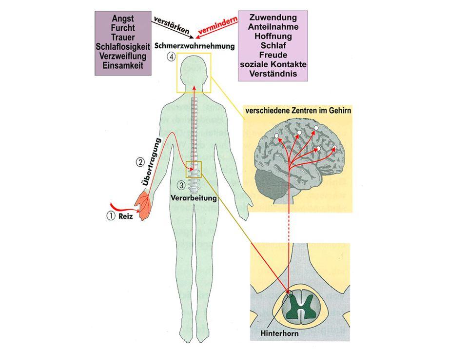 Antidepressiva wirken: A.antidepressiv B. schmerzlindernd: 1.