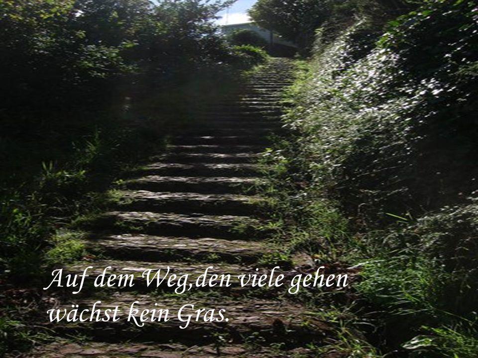 Auf dem Weg,den viele gehen wächst kein Gras.